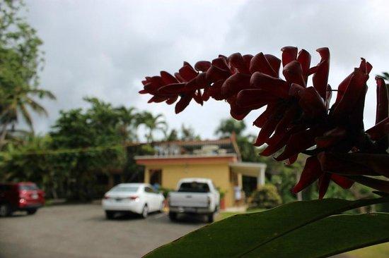Ceiba Country Inn: The Inn from the parking area