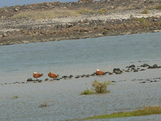 Parque Natural de Corralejo: fauna