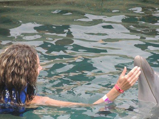 Dolphinaris Cancun: Con un dulce delfin!