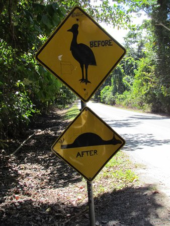 Daintree National Park : before-after