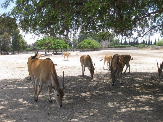 "Safari Park : Животные на ""свободе"""