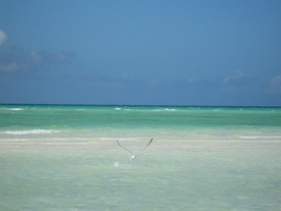 Sol Cayo Guillermo: Beach