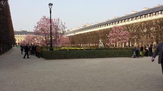 Drouant : le jardin du palais royal proche et ses magnifiques magnolias d'asie