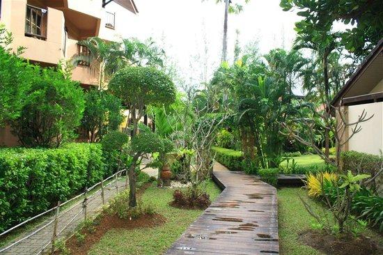 Phuket Island View: ต้นไม้รอบโรงแรม