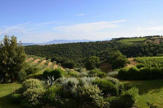 Agriturismo Il Quinto : Vista general del paisaje
