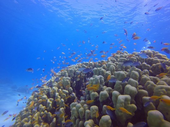 Manta Isrotel Diving Centre: Coral head teaming with seal life
