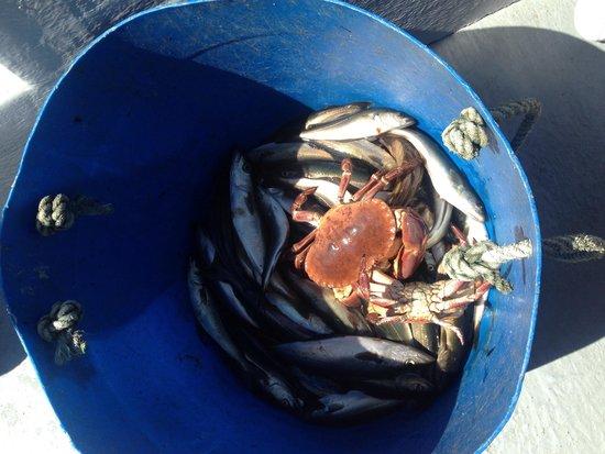 Islay Sea Adventures : Good mornings work