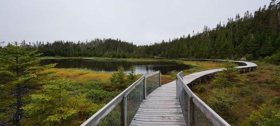 Salmonier Nature Park: Boardwalk trail around Canada goose pond