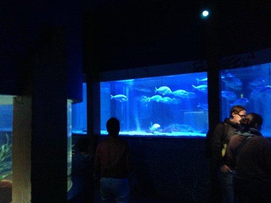 AquaDom & SEA LIFE Berlin: Sea Life