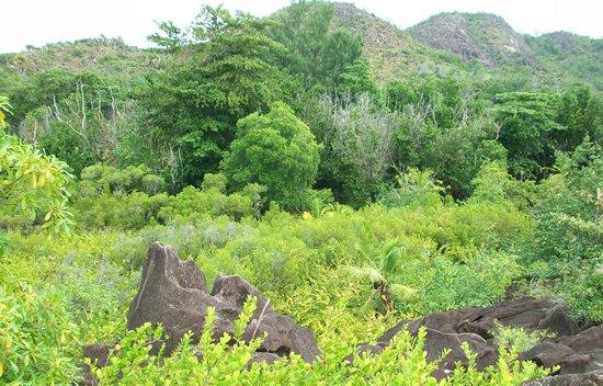 Curieuse Island: sul tetto della foresta