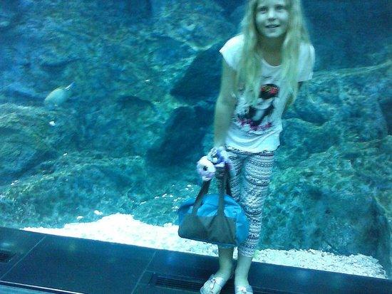 Dubai Aquarium & Underwater Zoo: Im Tunnel