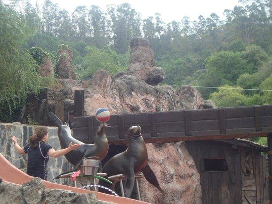 Parque de la Naturaleza de Cabarceno: Espectáculo con leones marinos