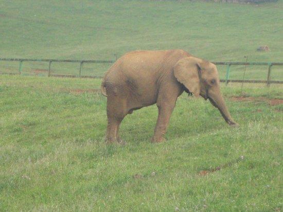 Parque de la Naturaleza de Cabarceno: Elefantes