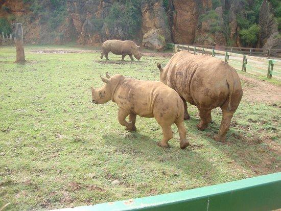 Parque de la Naturaleza de Cabarceno: Rinocerontes