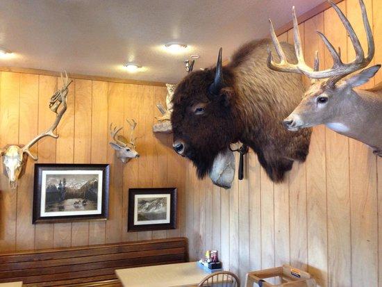 Vern's Place : Buffalo, deer and bears.