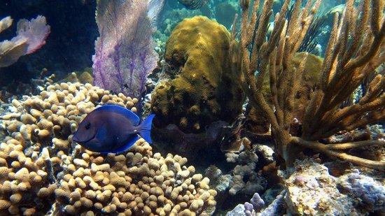 Paradisus Rio de Oro Resort & Spa : Plongée en apnée