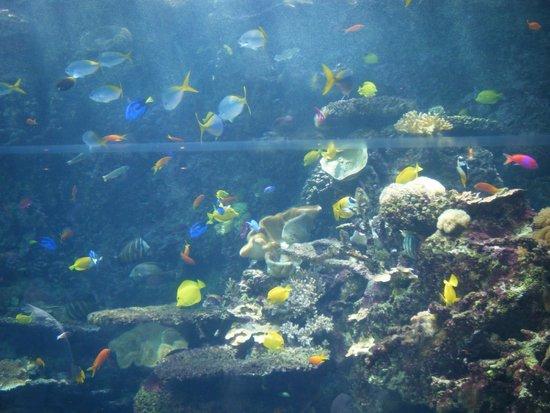 Georgia Aquarium: Salt Water Reef viewing window