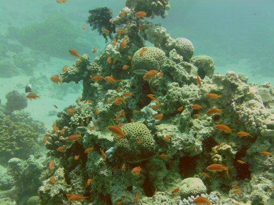Diving the cedar pride picture of dive aqaba aqaba for Aqaba dive
