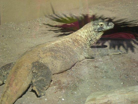 Palmitos Park: Veel verschillende dieren