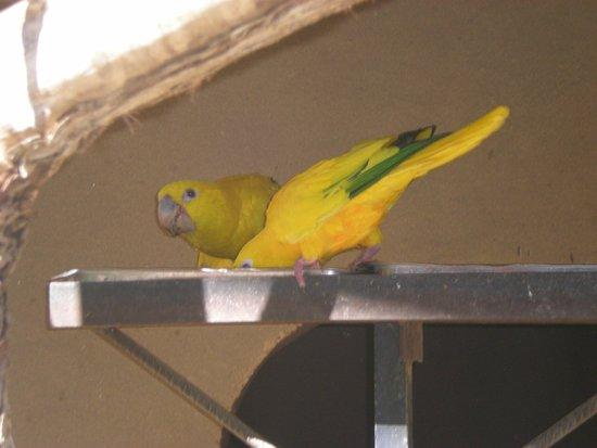 Palmitos Park: Mooie vogels