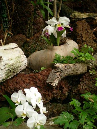 Palmitos Park: orchideeentuin
