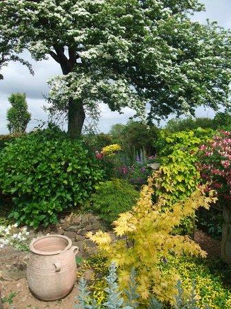 Poppy Cottage Garden: A large vriety of shrubs