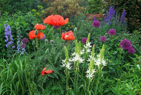 Poppy Cottage Garden: Poppies and flowers of all sorts