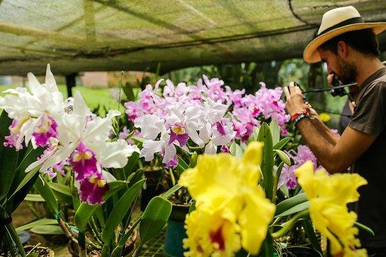 Orquídeas & Aves Finca Romelia