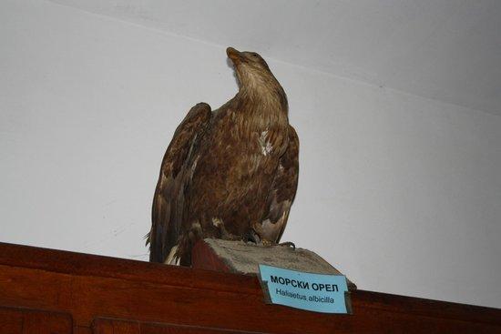 The Aquarium and the Black Sea Museum: Аквариум