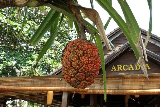 Arcadia Phu Quoc Resort : Arcadia
