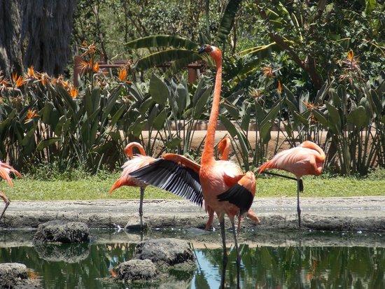 Zoologico Guadalajara: Un bonito lugar