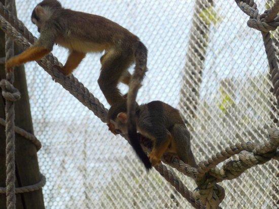 Zoologico Guadalajara: Te divertiras y aprenderas