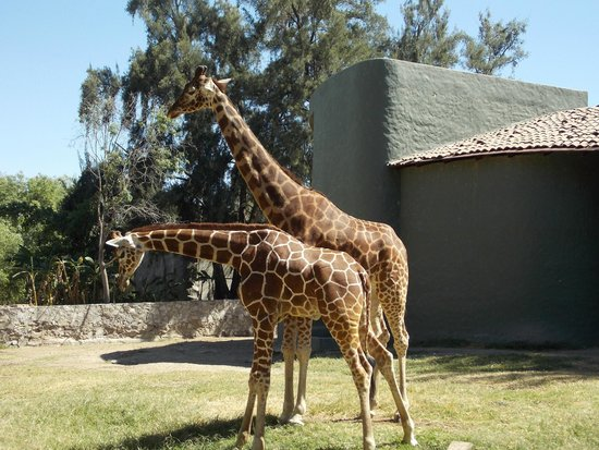 Zoologico Guadalajara: Sorprendente
