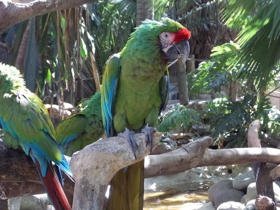 Zoologico Guadalajara: Interacción con los animales