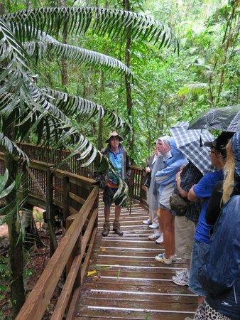 Daintree Rainforest: Walkway Tour