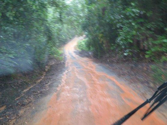 Daintree Rainforest: Off Road Fun!!!