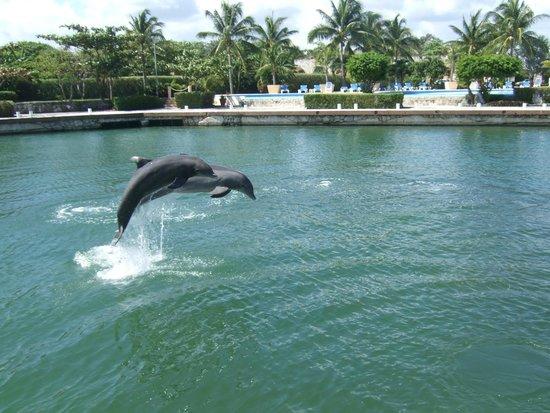 Dolphin Discovery Puerto Aventuras: Flipper ?