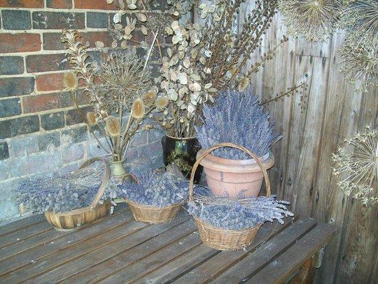 Paycockes: Dried Flowers