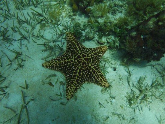 Fernandez Bay Village: star fish