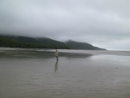 Daintree National Park : Cape Tribulation Beach
