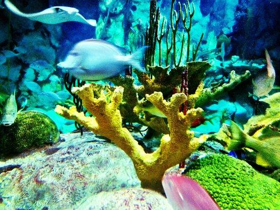 Shedd Aquarium : Large aquarium exhibit by front door