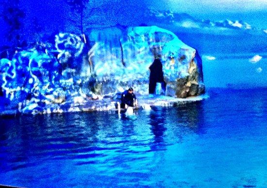 Shedd Aquarium : Indoor Water Show