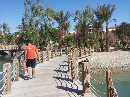 Sheraton Miramar Resort El Gouna: landscape