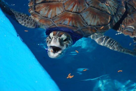 Sea Turtle Hatchery: C'est l'heure de manger