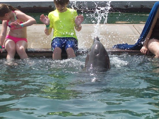 Unexso: Dolphin Playing
