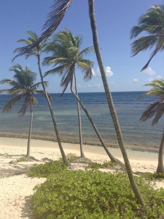 The Palms at Pelican Cove: The view from our room