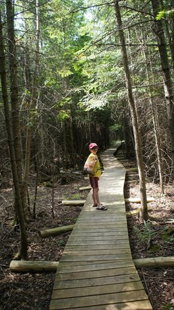 Thorne Swift Nature Preserve: Walking through the woods