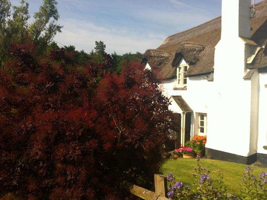 Brook Farm House: Brooks Farmhouse mit rotem Ahorn.
