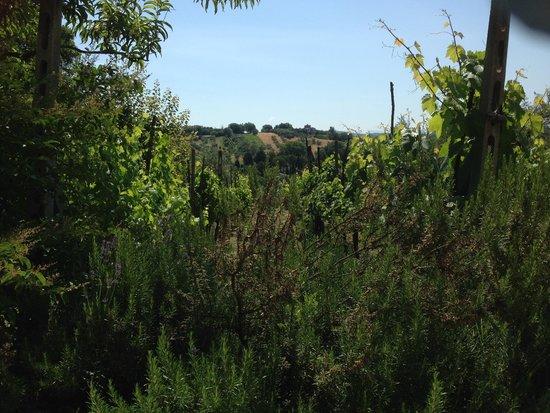 Il Pomario di Montepiglio: Vista dall'ingresso