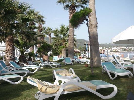 Paloma Pasha Resort : Aire gazonnée entre la plage et la piscine